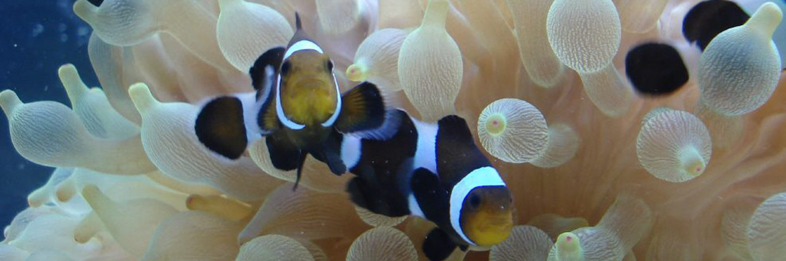 aquaristik in der nähe
